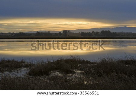 Water birds feed in the shallow water of the Berg River, near Velddrif, on the West Coast of South Africa, as the sun rises.
