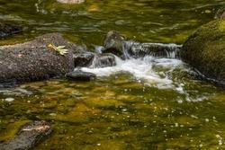 water cascading in willard brook  located in willard brook state park in townsend massachusetts