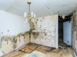 Water damage causing mold growth on the interior walls of a property