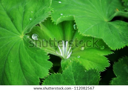 Water dripping on the green leaves