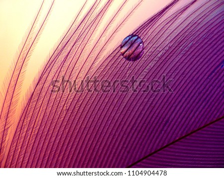 Water drop magnifying the grid structure of a small decorative feather.