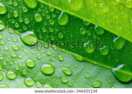 Water drop on a leaf after rain