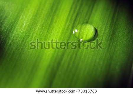 Water drop on an green yucca leaf