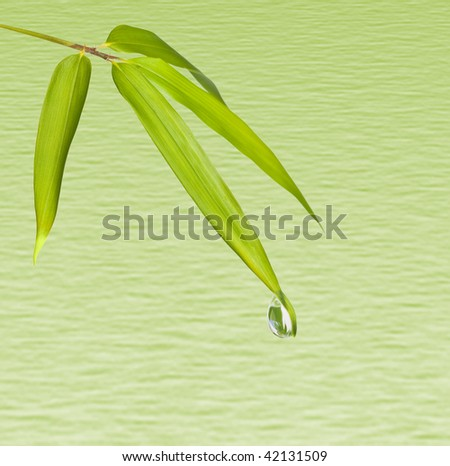 Water drop on  bamboo leaves isolated green wavy background