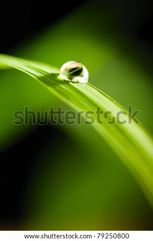 water drop on fresh green grass on blurred background
