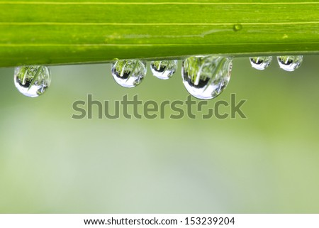 Water drop on fresh green leaf