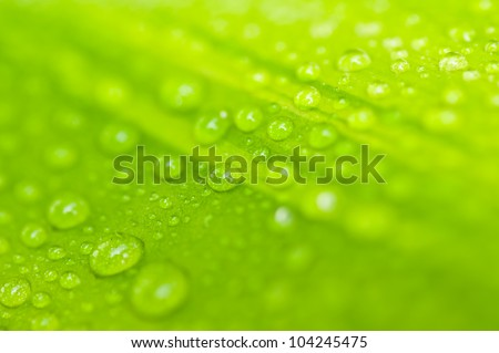 Water drop on green leave