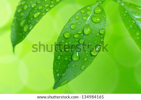 Water drop on green leaves