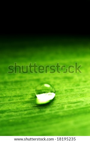 water-drop on green plant