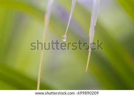 water drop on leaf  #699890209