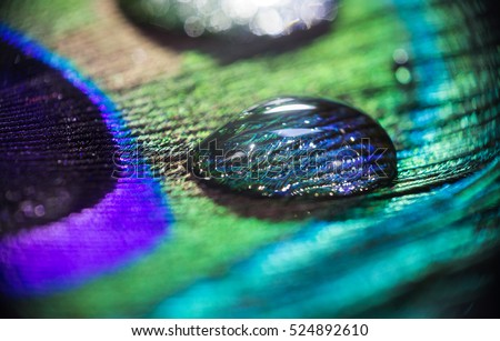 Stock Photo Water drop on Peacock feather. A concept macro shot of a water drop on a colorful peacock feather.