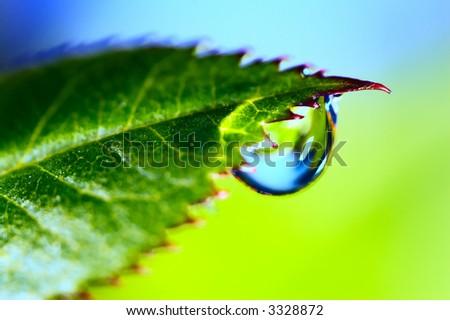 Water drop on the fresh green leaf. Super Macro