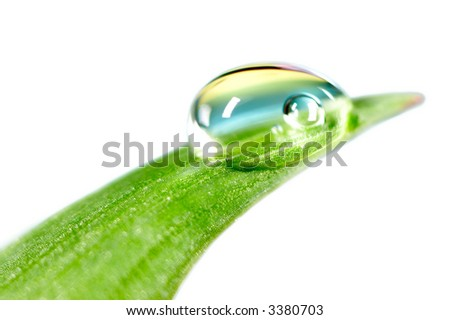 Water drop on the fresh green shoot. Isolated over white background