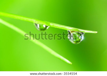 Water drop on the fresh green shoot. Super Macro