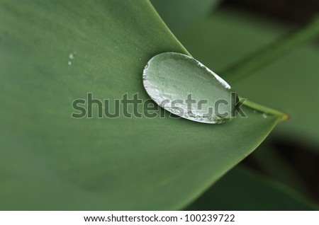 Water droplet on a green leaf edge