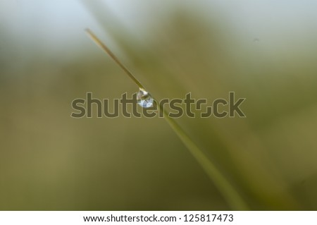 Water droplet on blade of grass reflecting meadow behind it