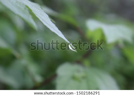 Water Droplet | Water droplet on a leaf