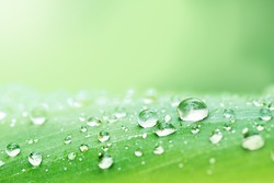 Water droplets on a leaf, beautiful natural background