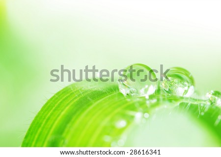 water droplets on a leaf; shallow (DOF)