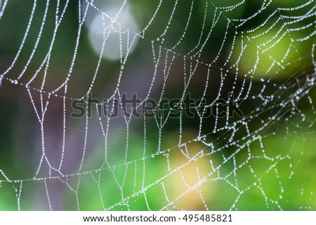 Stock Photo water droplets on a spider web in nature