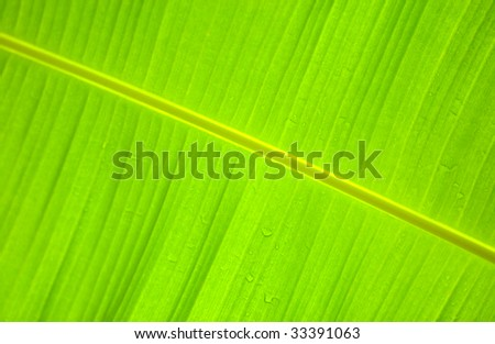Water droplets on a tropical leaf