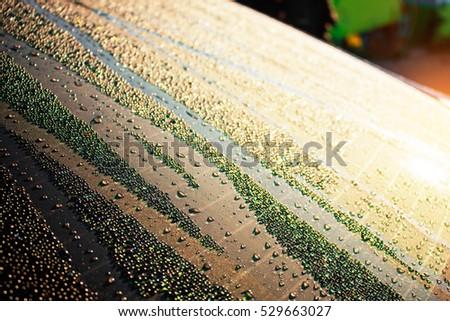 Water droplets on glass with sunlight in the morning of winter. #529663027