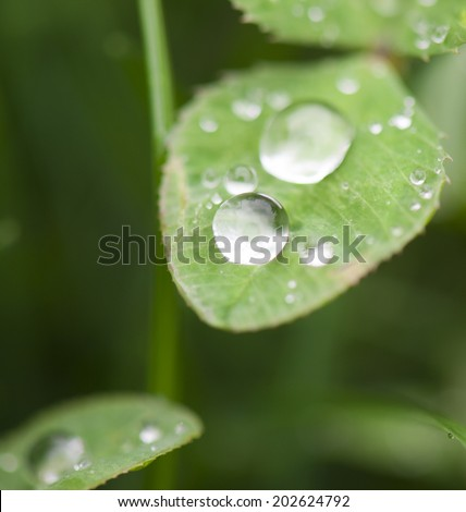 Water droplets on grass leaves/Water droplets