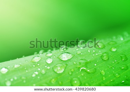 Water droplets on green leaf, Beautiful natural background, Abstract green background #439820680
