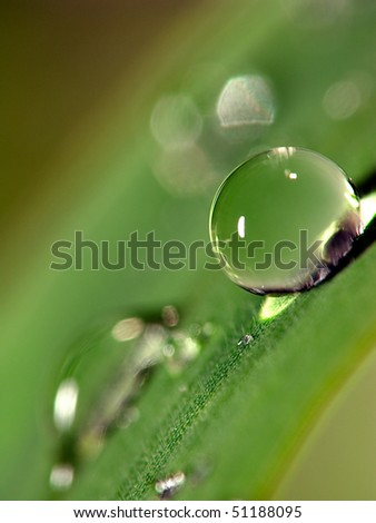 Water droplets on leaf (close up 1.5mm water droplets)