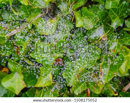 Water droplets on spiderweb after a rain.