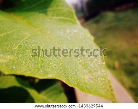 water droplets on the leaves