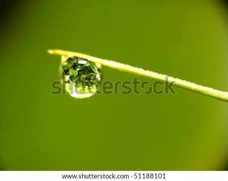 Water droplets onthe top of leaf (close up 1.5mm water droplets)