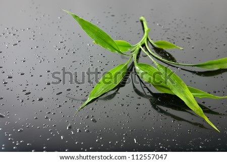 Water drops and green bamboo leaves on black glass