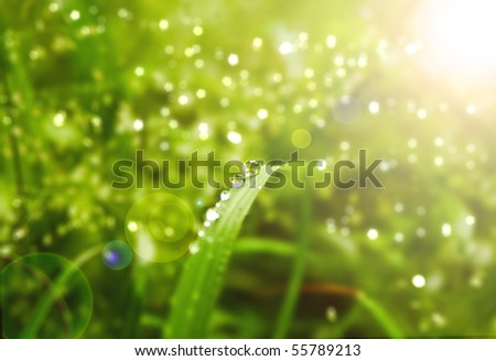 Water drops on fresh green grass