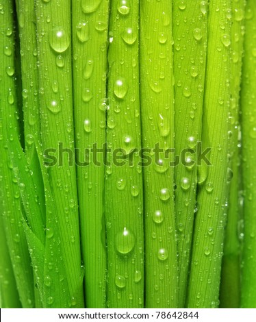 Water drops on fresh green grass