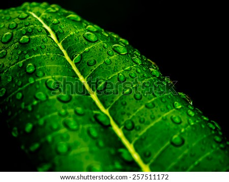 Water drops on fresh green leaf #257511172