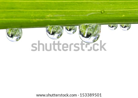 Water drops on fresh green leaf isolate on white