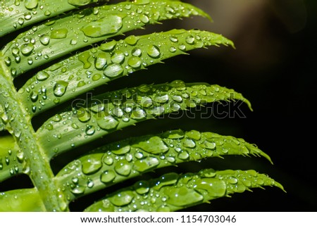 Stock Photo Water drops on green fern leaves. Morning dew on plant branches. Humidity or rain on trees. Garden after watering.
