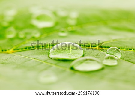 Water drops on green fresh leaf macro - Shutterstock ID 296176190