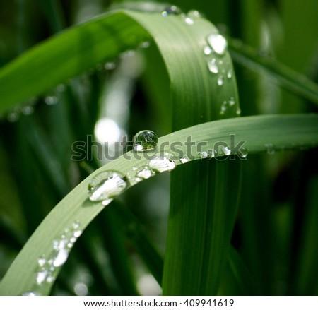 Water drops on green leaves Stock fotó ©