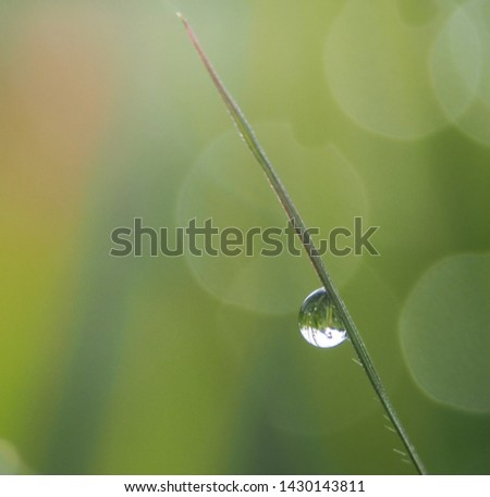 Water drops on green leaves have a green background #1430143811