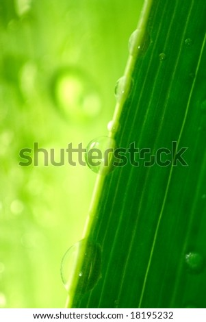 water-drops on green plant