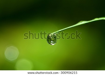 Water drops on leaf #300906215