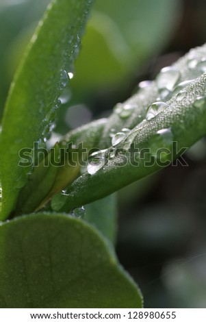 Water drops on leave