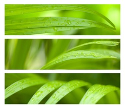 Water Drops on Palm Leaves Banner Set