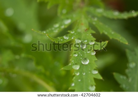 Water drops on plant in wild nature