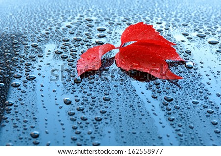 Water drops on polished car paint with red leaf