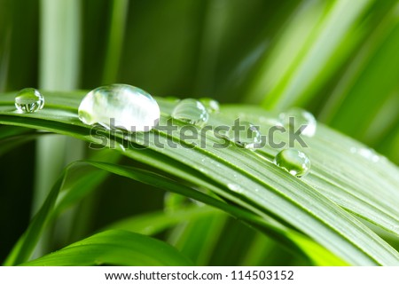 water drops on the green grass #114503152