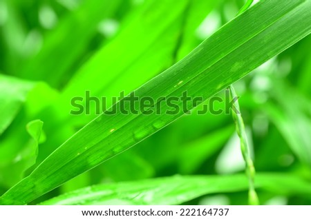Water drops on the green grass - Shutterstock ID 222164737