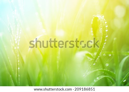 water drops on the green grass close up with soft focus #209186851
